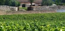 Des infos sur les vins à prendre ici : vente-de-vin.com